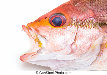 Fresh Red Snapper Fish. - Fresh Red Snapper Fish On White...