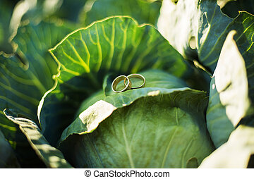 Rings on cabbage - Two wedding rings on cabbage