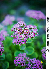 Photo wedding rings on purple flower