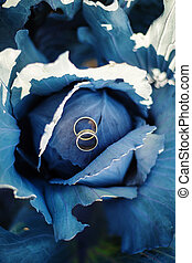 Rings on blue cabbage - Two wedding rings on blue cabbage