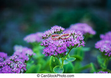 Wedding rings on a purple flower - Two wedding rings on a...
