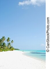 Beach paradise with palm trees - beautiful scene beach in a...