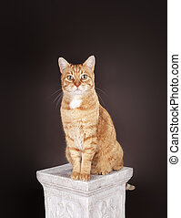 Cat sitting on a column - Ginger cat sitting on a column.