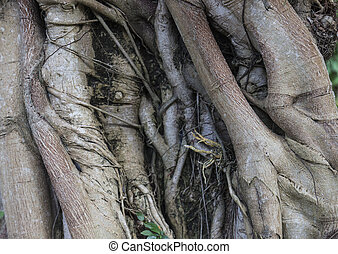 big trunk for background