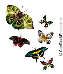 Flock of butterflies