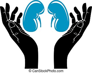Hands with human kidneys vector symbol.