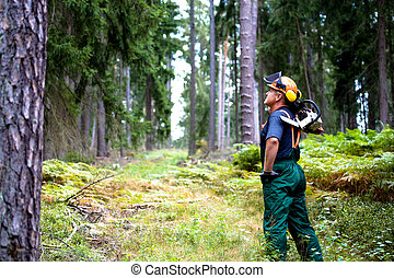 lumberjack - a woodcutter at work in the forest