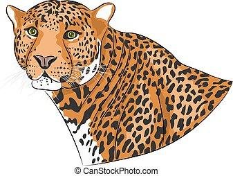 vetorial, cabeça, de, Um, jaguar.,