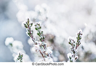 Frozen heather flower, floral vintage winter background,...