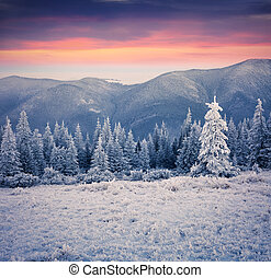 Beautiful winter sunrise in the mountain forest First frost...