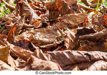 Autumn Leaves - Texture of autumn leaves