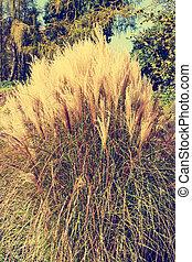 clump of high grass