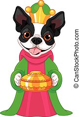 The Boston terrier as a Biblical Ma - Boston terrier,...
