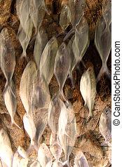 Fish shoal motion effect - Creative design of Fish shoal...