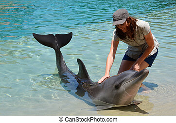 Woman interact with Dolphin in Sea World Gold Coast...