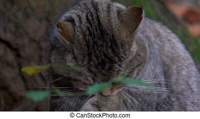 wildcat in autumn