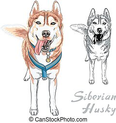 vector dog Siberian Husky breed - dog Siberian Husky breed...