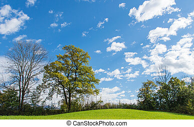 Green meadow - Green field and trees under blue sky