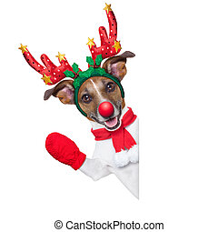 reindeer dog behind a blank banner with a red nose and...