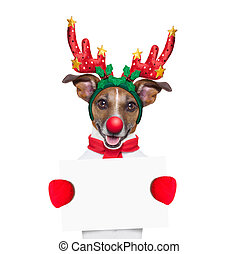 reindeer dog holding a blank white placard or banner with a...