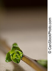 Spring in the Air - Little green flower bud on a stem laid...