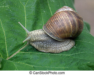 snail - More silently you go you will be further