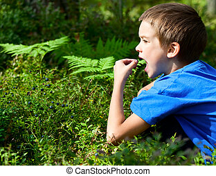 Kid picking berries - Young boy eating blueberries in a...