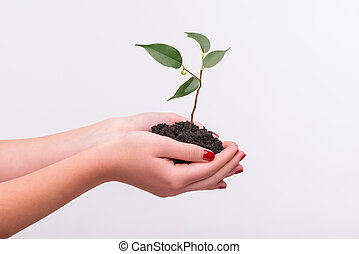 Concept of new life - Little green plant in the hands of...