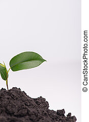 Concept of new life - Little green plant growing in a heap...