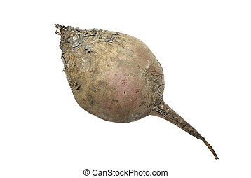 Studio shot of dirty raw beet isolated on white background.
