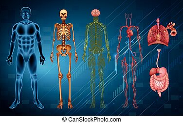 Human body systems - The various human body systems and...