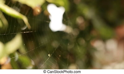 Spiderweb on the tree branches