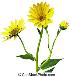 Helianthus - The genus is one of many in the Abstracter that...