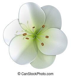 Allium - The onion genus Allium comprises monocotyledonous...