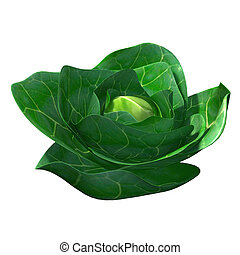 Brassica, in the mustard family, containing about 40 Old...