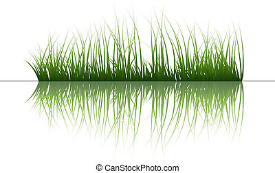 grass on water - Vector grass silhouettes background with...