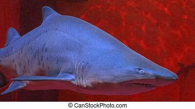 Aquarium shark - Creative design of Aquarium shark