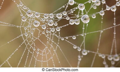 Beautiful spider's web with drops a