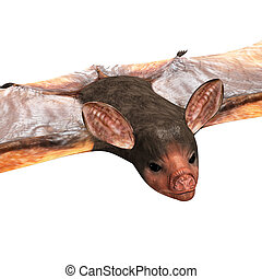 Bats are mammals of the order Chiroptera from the Greek...