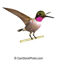 Anna s hummingbird - Annas hummingbird is a medium-sized...