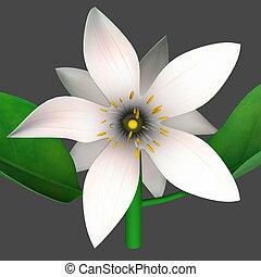 Citrus Flower - Citrus is a common term and genus Citrus of...