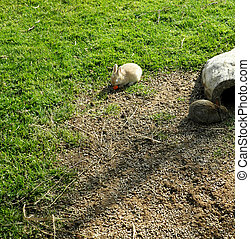 Two rabbits on the ground. Picture taken on March 13, 2011....
