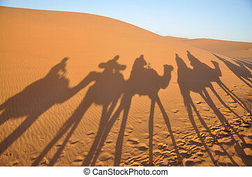 Shadows of camels in Sahara desert Merzouga, Morocco