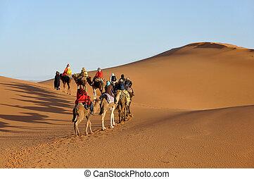Merzouga, norte, marruecos, camello, áfrica, desierto,...