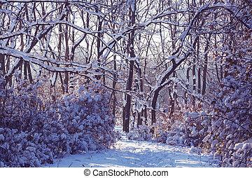 Winter in park - Winter scene in park