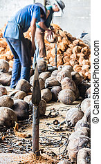 Steel knife for Splitting Coconuts. - Close up steel knife...