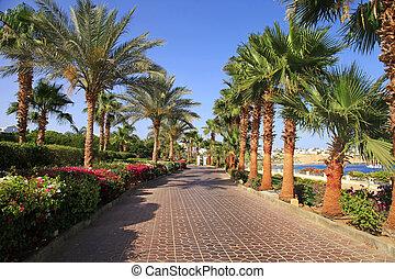 Palma, árboles, y, Acera, Sharm, el, jeque, Egipto,