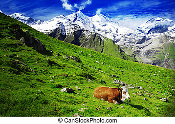 Alps and cows - Beautiful alpine landscape with peaks...