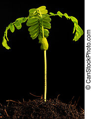 Young plant on black background