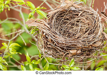 Empty bird nest on tree